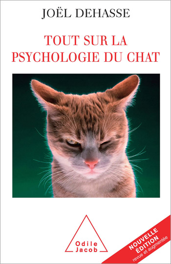 Everything About Cat Psychology